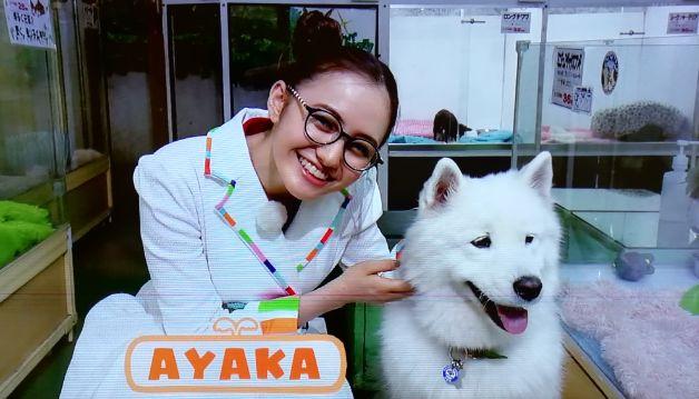 えいごであそぼayaka(アヤカ)お姉さんは誰?こどもちゃれんじ(英語)にも出演中!